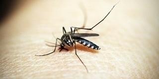Már az Antarktiszra se menekülhetünk a szúnyogok elől