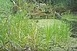 Vadmacskát rögzített a nemzeti park kamerája - Videó