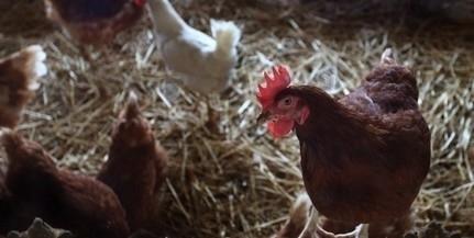 Már Bács-Kiskun megyében is megjelent a madárinfluenza