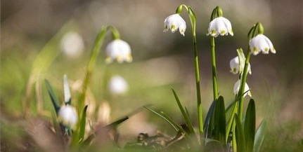 Jön, jön, jön a tavasz, az a ravasz