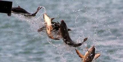 Május végére elfogyhat a hazai hal, hiány is lehet