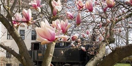 Derűre ború: kicsit visszavesz a tavasz vasárnap