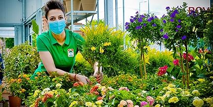 Oázis: Pécsett is várja vásárlóit hazánk leggazdagabb kínálatú, pálmafás logójáról jól ismert kertészet