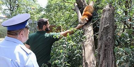 Macikat fogadtak örökbe a baranyai rendőrök, rendszeres vendégek lesznek az állatkertben