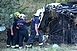 Tragédia! Többen meghaltak egy buszbalesetben az M7-esen