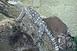 Megérkezett az új pécsi állatkert első hírnöke, a pápuavaránusz