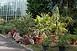 Megkezdődött az Ifjúság úti egyetemi botanikus kert felújítása