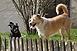 Ilyen a pécsi kutyatár: keveréket, tacskót és német juhászt tartanak a legtöbben