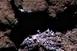 Vízjégfoltokat fedezett fel a Rosetta egy üstökösön