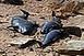 Mérgező anyagokat találtak delfinek szervezetében