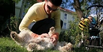 Hemzseghetnek a kullancsok - A kutyákra is veszélyes vírusokat hordozhatnak