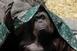 Húsz év fogság után szabadulhat Sandra, az orángután
