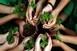 Fazekas: jelentősen javult Magyarország környezeti állapota