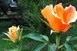 Egy csokor rózsával várják a véradókat csütörtökön