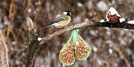 Jó, ha tudjuk: így etessük télen az éhező madarakat