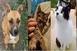 Állatok Karácsonyát rendeznek az állatmentők hétvégén