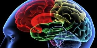 Ismét bizonyították, hogy nem különbözik a férfi és a női agy