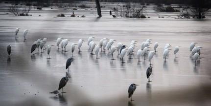 Pécsi Újság - Világ+Bulvár - Európa vizes élőhelyeinek kétharmada eltűnt d2a92e1ce2
