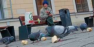 Új műsor a belvárosban: hajléktalanok vették szárnyaik alá a pécsi galambokat