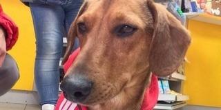 Megvan a népszerű mohácsi kutya, Sell Sanyi utóda