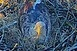 Tojást rakott a nemzeti park sasmamája