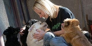 Siralmas az állatok helyzete Dezső Kármen szerint, aki több száz négylábút mentett már meg