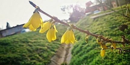 Uránvárosban már beköszöntött a tavasz