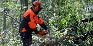Duplaannyi erdő van az országban, mint 90 éve