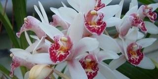 Különleges növények virágzanak a Botanikus Kertben