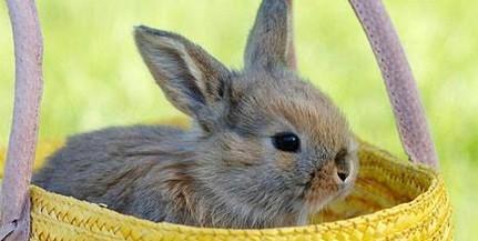 Befogadják a húsvéti nyuszikat, ha már nincs rájuk szükség