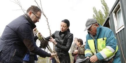 Magánkertek is szépülnek a Városi Csemetekert növényeiből Pécsett