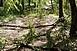 Letört, meghajlott ágak, kidőlt fák veszélyeztetik a közlekedést a parkerdőben