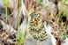 Eddig ismeretlen pillangófajt fedeztek fel Izraelben