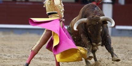 A bikaviadalok ellen tüntettek Madridban