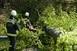 Félmilliárdos kárt okozott a Bükkben az áprilisi időjárás