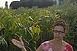 Néhol már virágzás előtt a parlagfű, aki nem tünteti el, azt július elseje után megbüntethetik