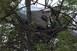 Fennakadt egy fán egy repülő, megúszták az utasok