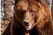 Medve támadt egy fiatal juhászra a Retyezátban