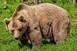 Medvetámadás: hiába hívták a 112-őt, nem kaptak segítségek
