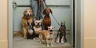 Hihetetlen, de ilyen is van: a kutya összepiszkítja a liftet, a gazdinak esze ágában sincs feltakarítani