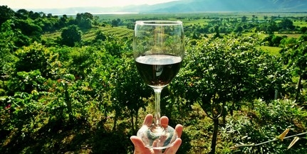 Bormedence: határon túli termelők borait kóstolhatjuk
