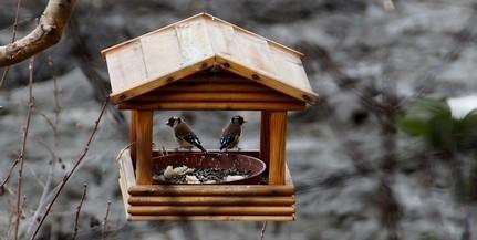 A madáretetésről tanulhatunk pénteken Pécsett