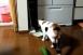 Nem tudjuk megunni a macskákat