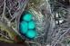 Volt tojás, nincs tojás
