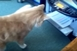 Macska vs. nyomtató