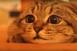 Horrort néz a cica